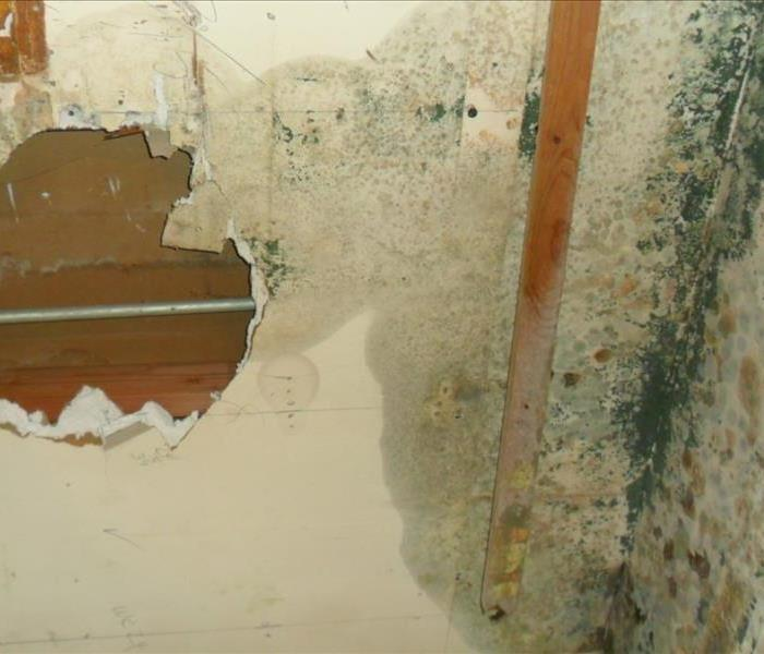Mold Damage in Palos Heights Before