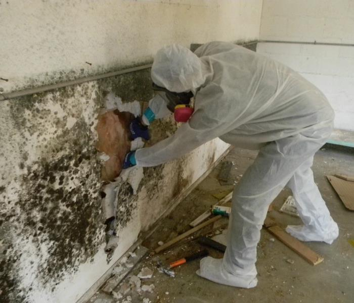 Mold Cleanup in Orland Park