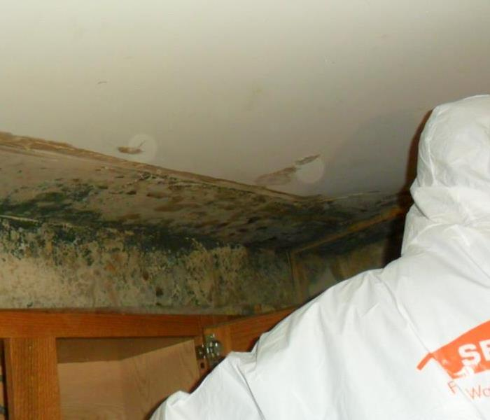 Mold Remediation Palos Residents: Follow These Mold Safety Tips if You Suspect Mold