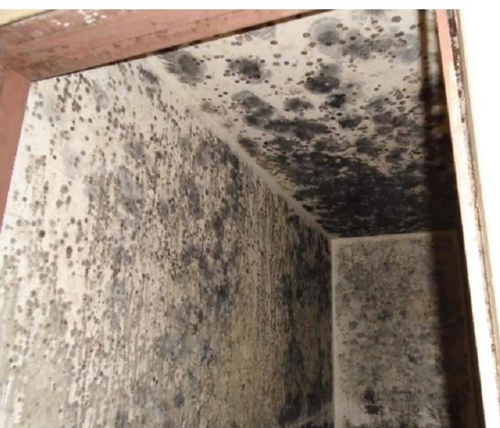 Mold Remediation Does Your Palos Heights Home Have a Mold Problem?